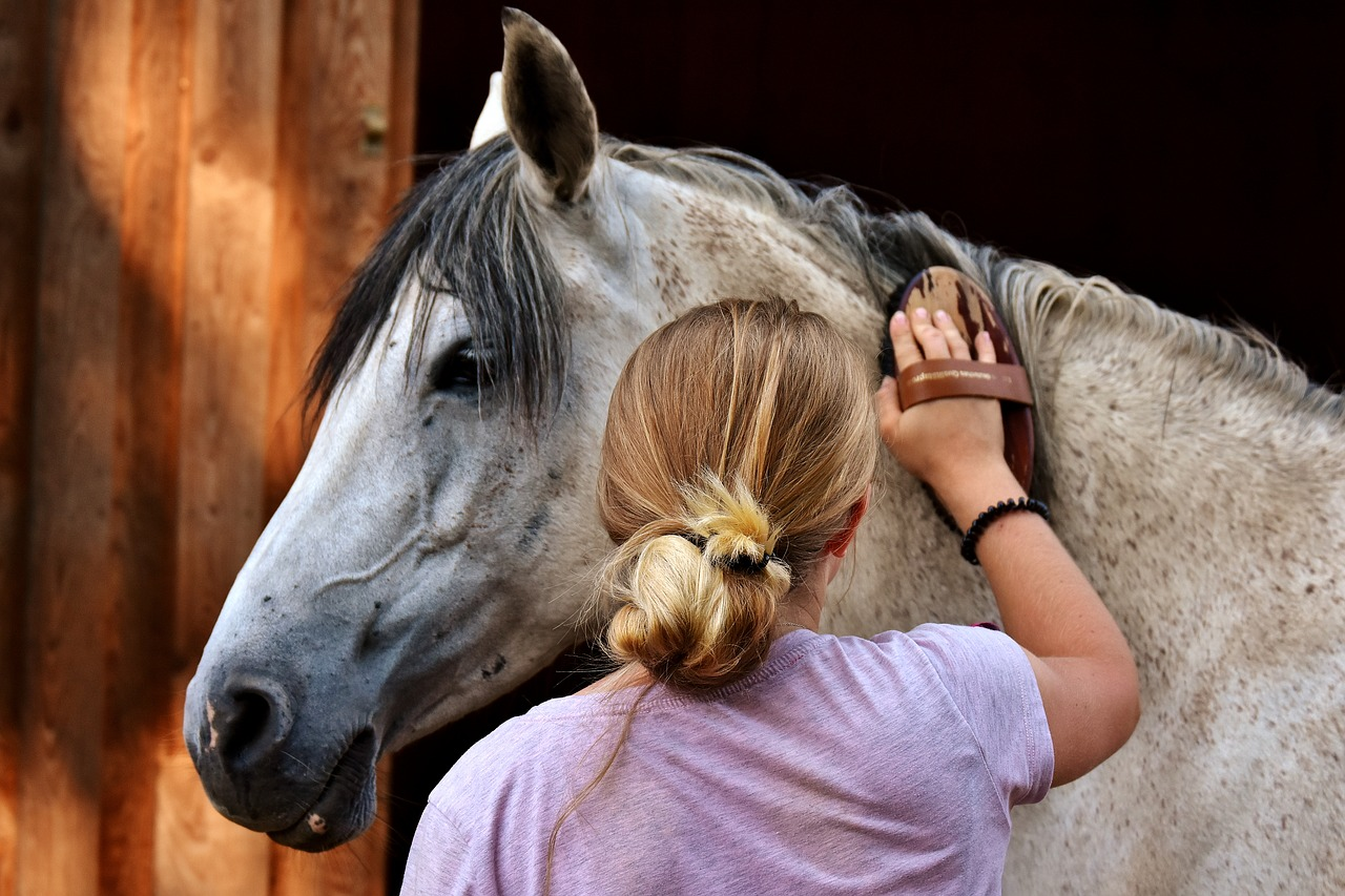 Horse love and care